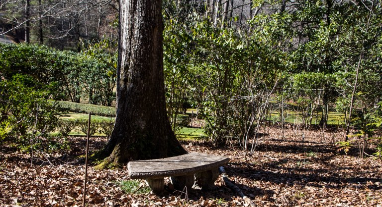 The Lone Bench-3