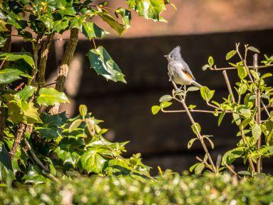 Back Yard Birds 2-4