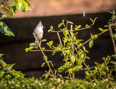Back Yard Birds 2-5